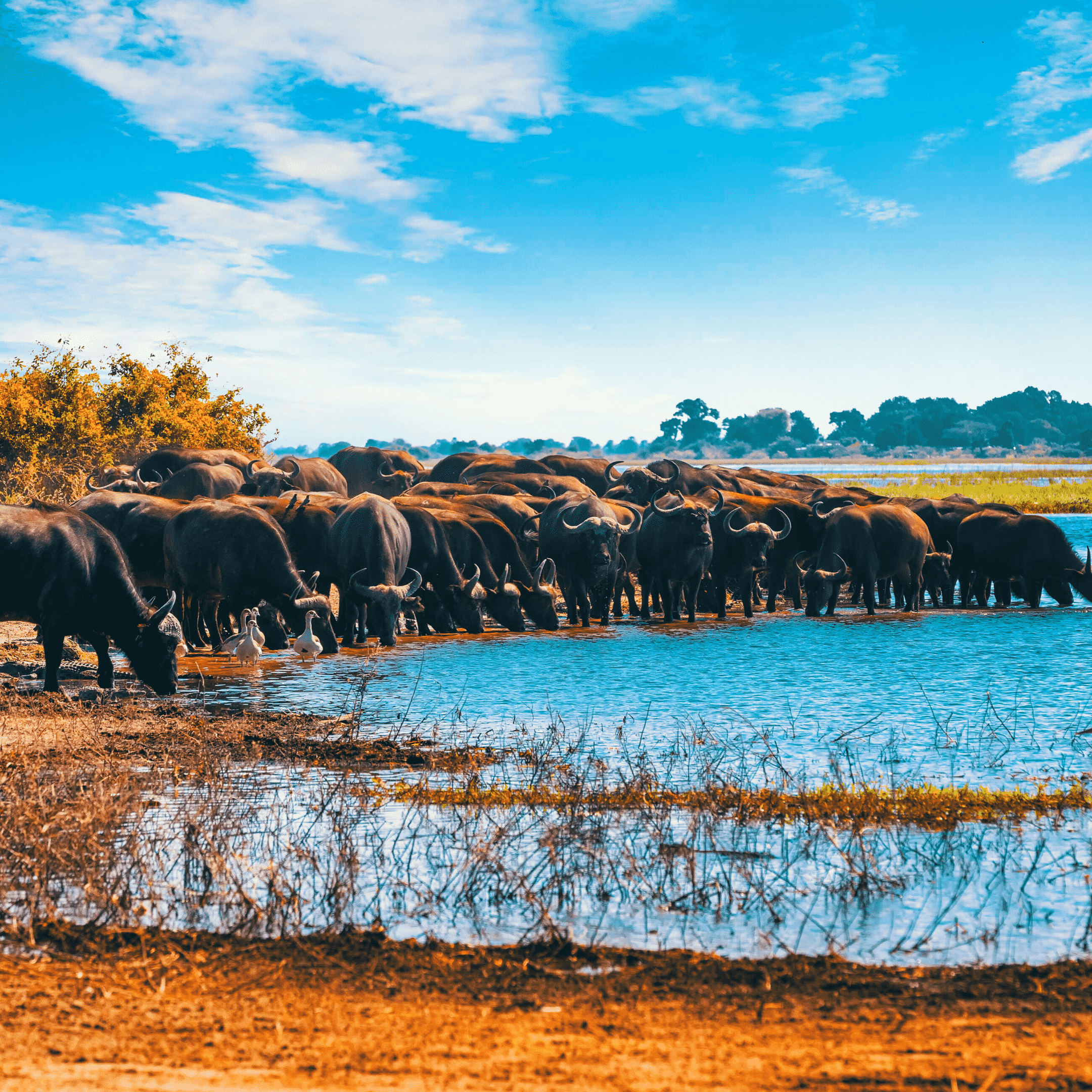 Chobe National Park, Botswana   25 places to visit before turning 25